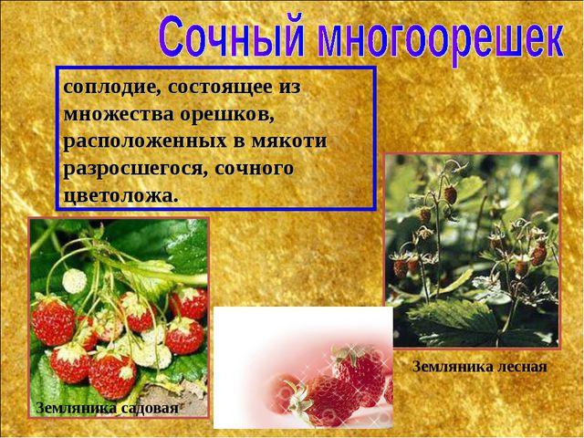 соплодие, состоящее из множества орешков, расположенных в мякоти разросшегося...