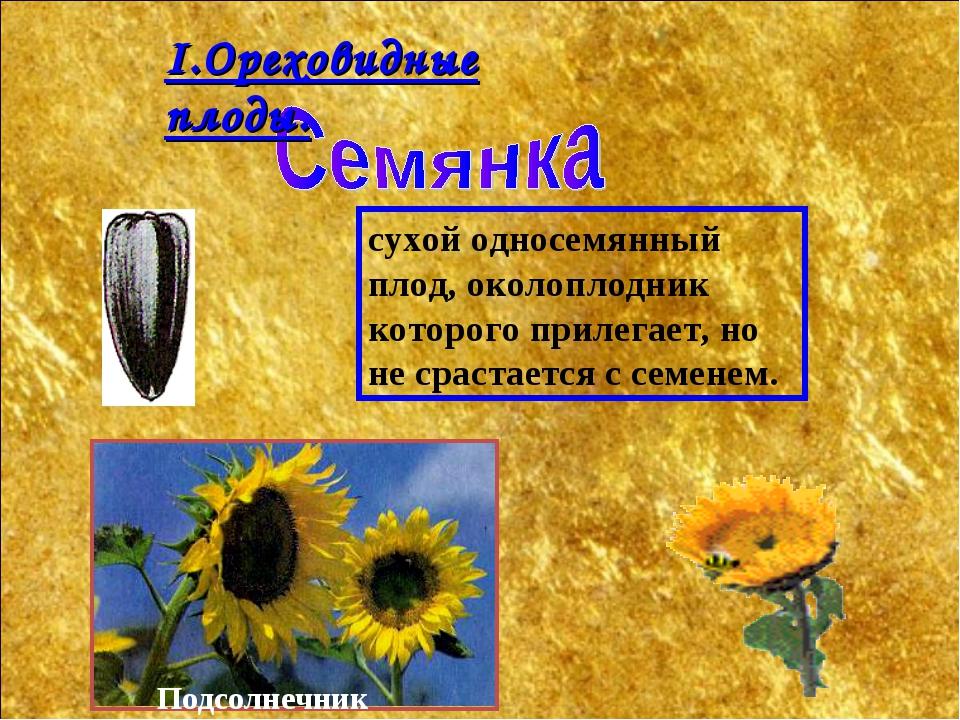 сухой односемянный плод, околоплодник которого прилегает, но не срастается с...