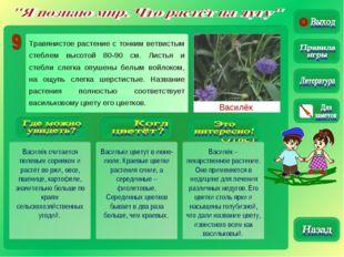 Василёк Василёк считается полевым сорняком и растёт во ржи, овсе, пшенице, ка