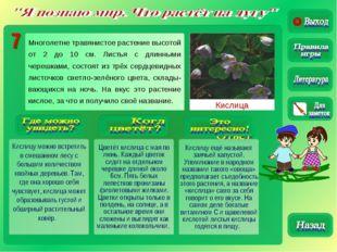 Кислица Кислицу можно встретить в смешанном лесу с большим количеством хвойны