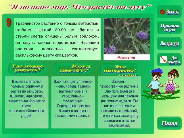 Василёк Василёк считается полевым сорняком и растёт во ржи, овсе, пшенице, ка...
