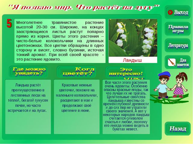 Ландыш Ландыш растёт преимущественно в лиственных лесах на тёплой, богатой гу...
