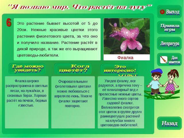 Фиалка Фиалка широко распространена в светлых лесах, на лужайках, в сосновых...