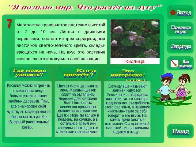 Кислица Кислицу можно встретить в смешанном лесу с большим количеством хвойны...