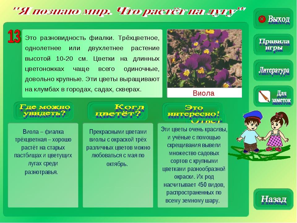 Виола Виола – фиалка трёхцветная – хорошо растёт на старых пастбищах и цветущ...