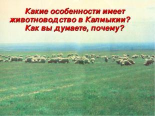 Какие особенности имеет животноводство в Калмыкии? Как вы думаете, почему?