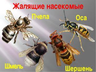 Жалящие насекомые Пчела Оса Шмель Шершень