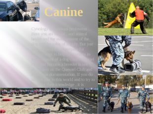 Canine Cynology is a serious profession . Here you are taught , and animal he