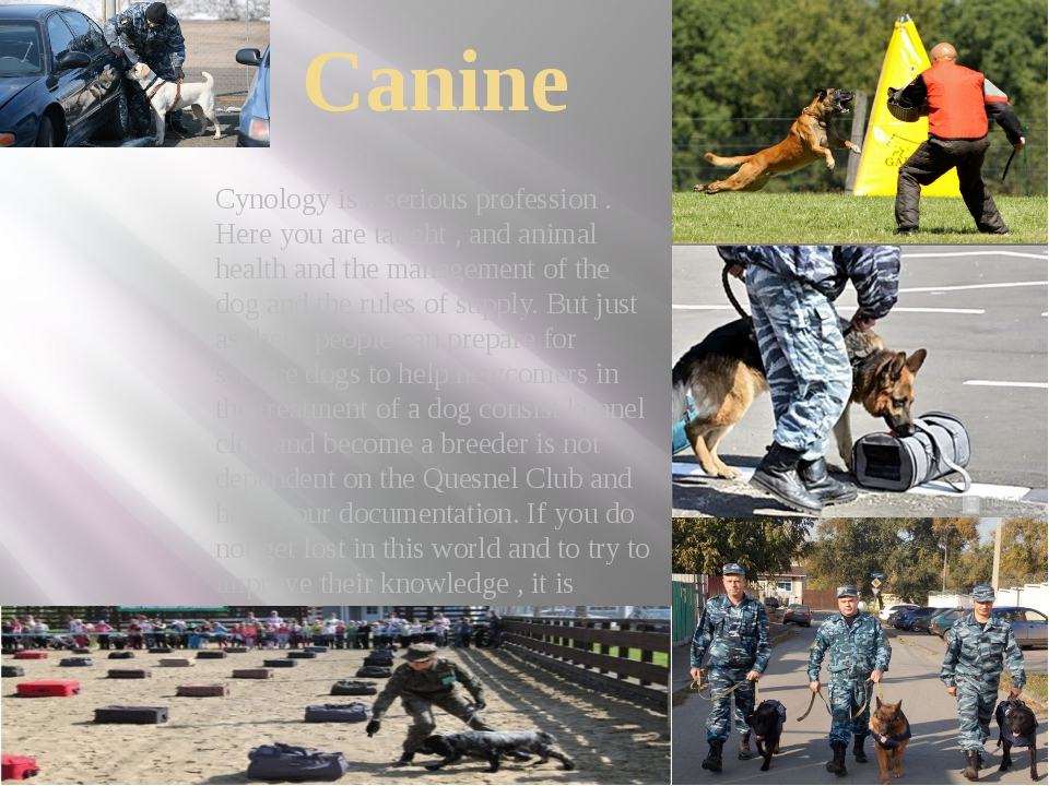 Canine Cynology is a serious profession . Here you are taught , and animal he...