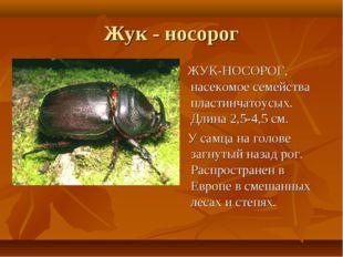 Жук - носорог ЖУК-НОСОРОГ, насекомое семейства пластинчатоусых. Длина 2,5-4,5