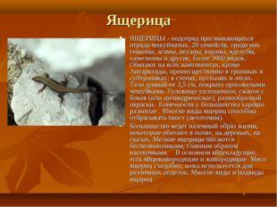 Ящерица ЯЩЕРИЦЫ - подотряд пресмыкающихся отряда чешуйчатых. 20 семейств, сре