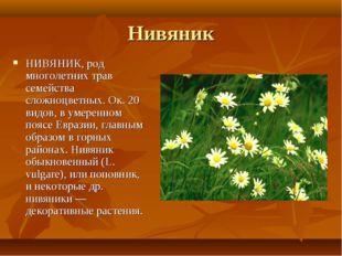 Нивяник НИВЯНИК, род многолетних трав семейства сложноцветных. Ок. 20 видов,