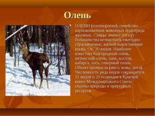 Олень ОЛЕНИ (плотнорогие), семейство парнокопытных животных подотряда жвачных