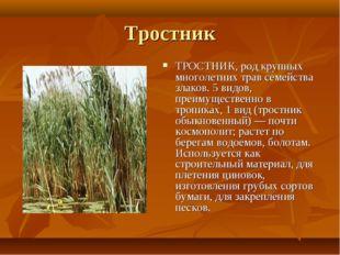 Тростник ТРОСТНИК, род крупных многолетних трав семейства злаков. 5 видов, пр