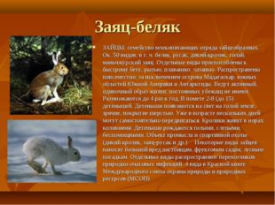 Заяц-беляк ЗАЙЦЫ, семейство млекопитающих отряда зайцеобразных. Ок. 50 видов,