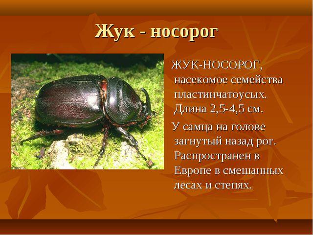 Жук - носорог ЖУК-НОСОРОГ, насекомое семейства пластинчатоусых. Длина 2,5-4,5...
