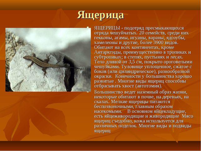 Ящерица ЯЩЕРИЦЫ - подотряд пресмыкающихся отряда чешуйчатых. 20 семейств, сре...