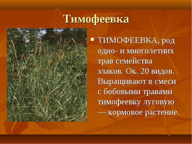 Тимофеевка ТИМОФЕЕВКА, род одно- и многолетних трав семейства злаков. Ок. 20...