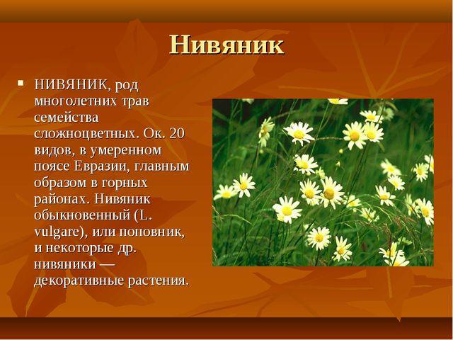 Нивяник НИВЯНИК, род многолетних трав семейства сложноцветных. Ок. 20 видов,...