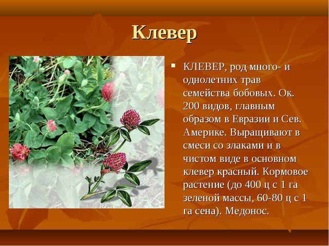 Клевер КЛЕВЕР, род много- и однолетних трав семейства бобовых. Ок. 200 видов,...