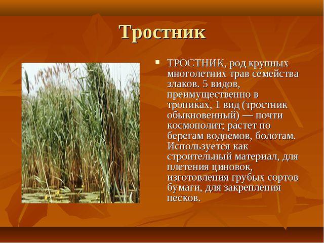 Тростник ТРОСТНИК, род крупных многолетних трав семейства злаков. 5 видов, пр...