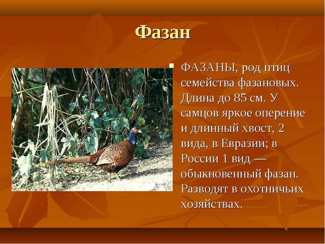 Фазан ФАЗАНЫ, род птиц семейства фазановых. Длина до 85 см. У самцов яркое оп...