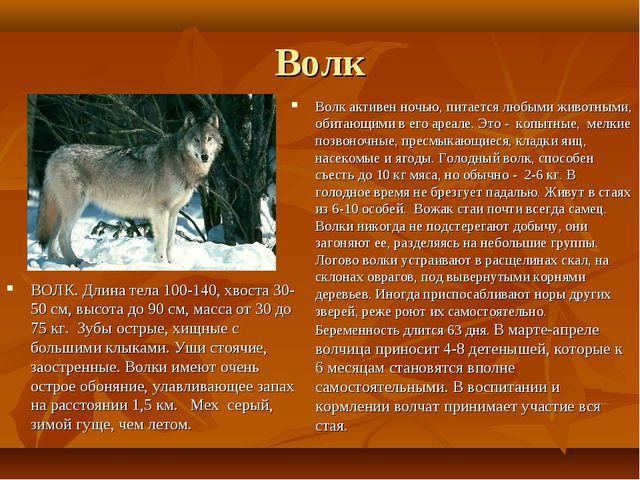 Волк ВОЛК. Длина тела 100-140, хвоста 30-50 см, высота до 90 см, масса от 30...