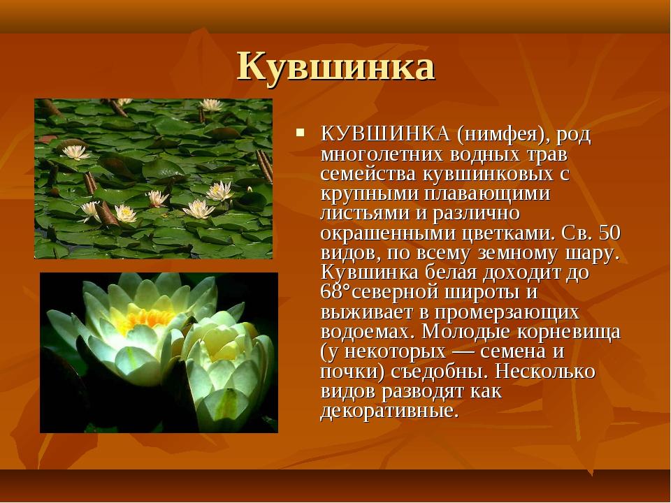 Кувшинка КУВШИНКА (нимфея), род многолетних водных трав семейства кувшинковых...