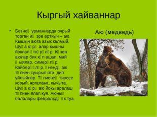 Кыргый хайваннар Безнең урманнарда очрый торган иң эре ерткыч – аю. Кышын аюг