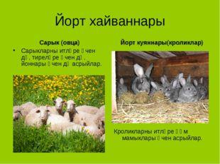 Йорт хайваннары Сарык (овца) Сарыкларны итләре өчен дә, тиреләре өчен дә, йон