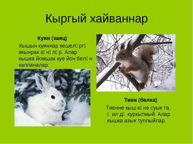 Кыргый хайваннар Куян (заяц) Кышын куяннар кешеләргә якынрак күчәләр. Алар кы...