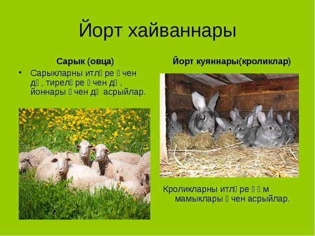 Йорт хайваннары Сарык (овца) Сарыкларны итләре өчен дә, тиреләре өчен дә, йон...