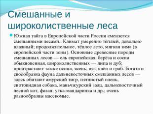 Смешанные и широколиственные леса Южная тайга в Европейской части России смен