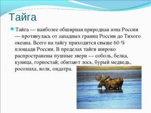 Тайга Тайга — наиболее обширная природная зона России — протянулась от западн