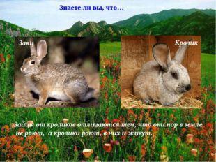 Заяц Кролик Знаете ли вы, что… Зайцы от кроликов отличаются тем, что они нор