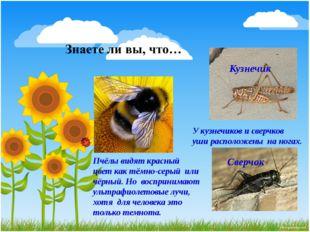Кузнечик Сверчок У кузнечиков и сверчков уши расположены на ногах. Пчёлы видя