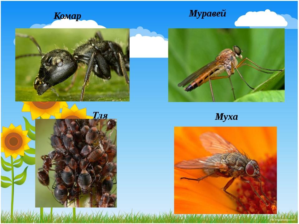 Муравей Комар Муха