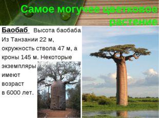 Самое могучее цветковое растение Баобаб Высота баобаба Из Танзании 22 м, окру