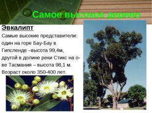 Самое высокое дерево Эвкалипт Самые высокие представители: один на горе Бау-Б