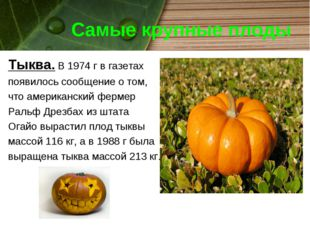 Самые крупные плоды Тыква. В 1974 г в газетах появилось сообщение о том, что