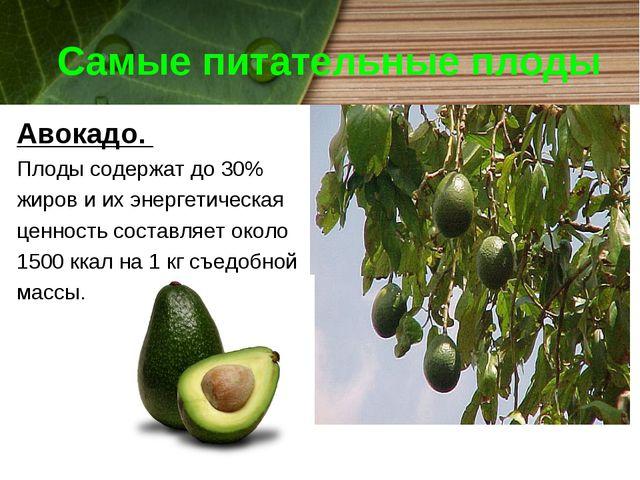 Самые питательные плоды Авокадо. Плоды содержат до 30% жиров и их энергетичес...