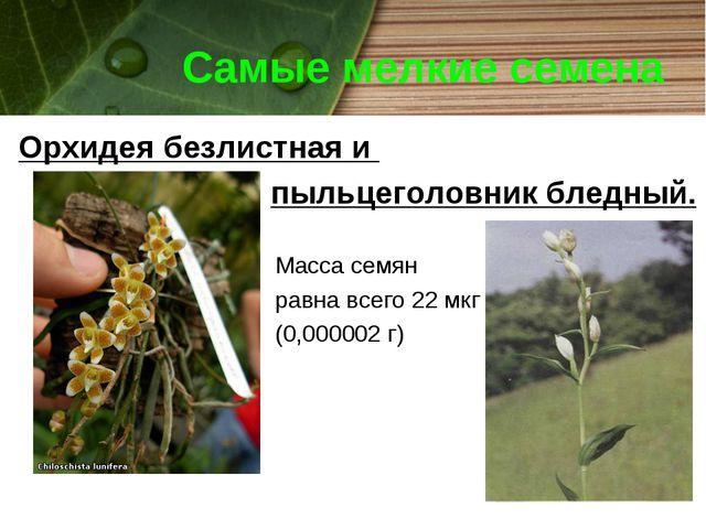 Самые мелкие семена Орхидея безлистная и пыльцеголовник бледный. Масса семян...