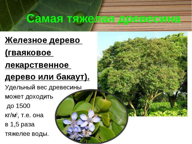 Самая тяжелая древесина Железное дерево (гваяковое лекарственное дерево или б...