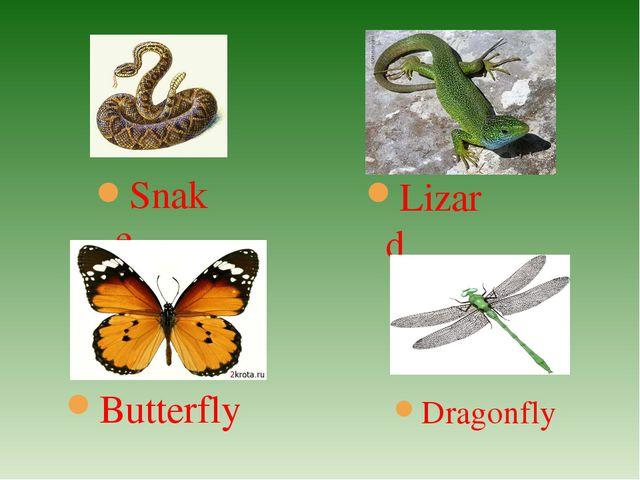 Snake Butterfly Lizard Dragonfly