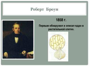 Роберт Броун 1858 г. Первым обнаружил и описал ядро в растительной клетке.