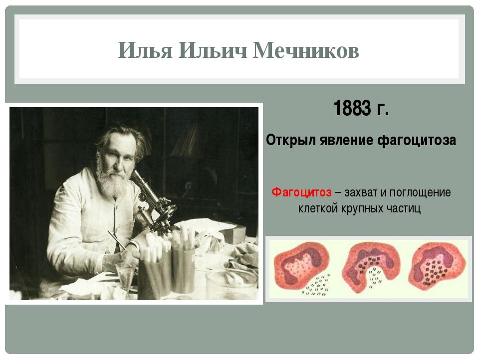 1883 г. Открыл явление фагоцитоза Фагоцитоз – захват и поглощение клеткой кру...