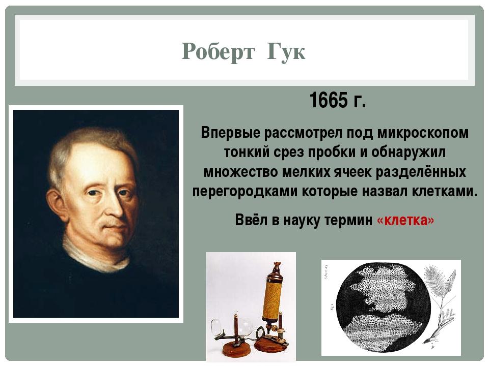 Роберт Гук 1665 г. Впервые рассмотрел под микроскопом тонкий срез пробки и об...