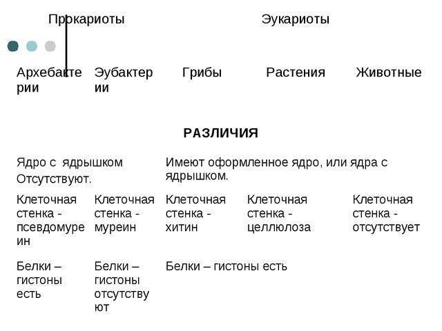 ПрокариотыЭукариоты  АрхебактерииЭубактерииГрибы Растения Животные РАЗЛ...