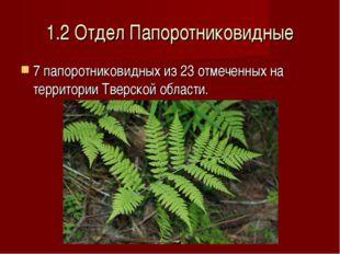 1.2 Отдел Папоротниковидные 7 папоротниковидных из 23 отмеченных на территори