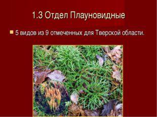 1.3 Отдел Плауновидные 5 видов из 9 отмеченных для Тверской области.